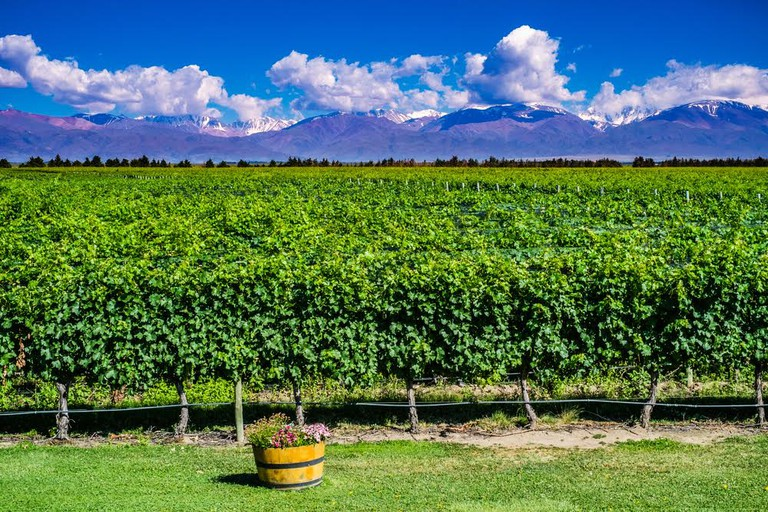 The Mendoza wine valley with snow-capped Andes in the background