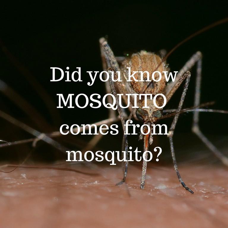 Mosquito / © Culture Trip