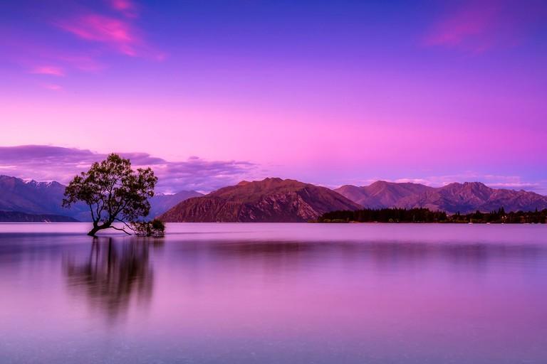 Lone tree in Lake Wanaka