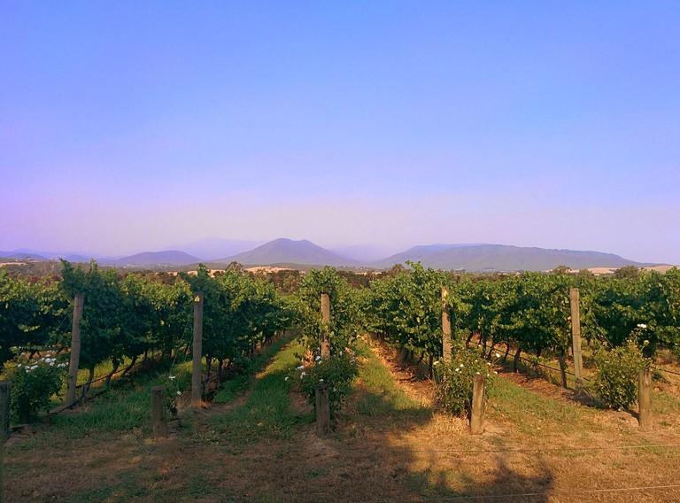 Rochford Wines vineyard in Yarra Valley Australia