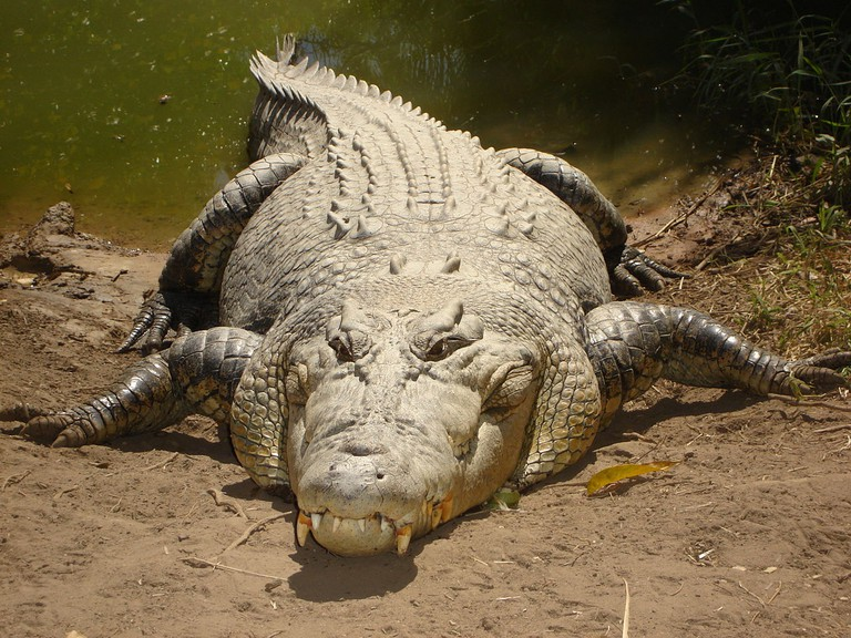There was at one time an abundance of Saltwater Crocs in Seychelles