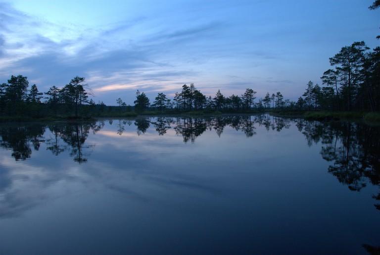 Swamp in Estonia