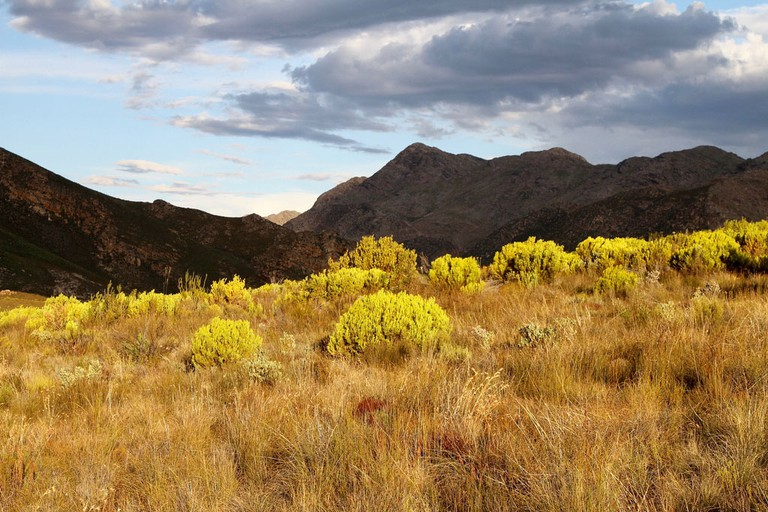 The Swartberg Nature Reserve is well worth  a visit