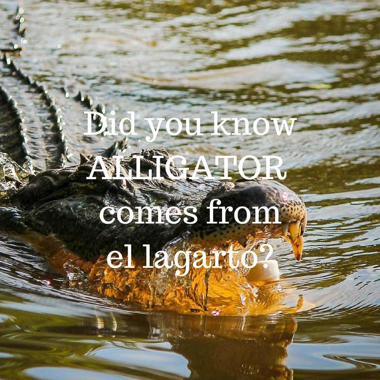 Alligator / © Culture Trip