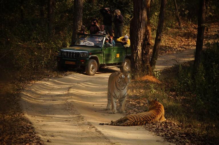 Tourist and Tiger | © Madhavi uikey / Wikimedia Commons