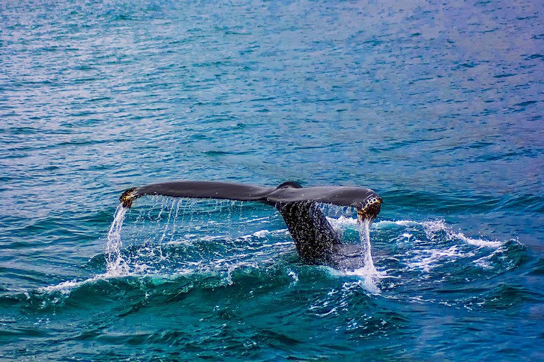 https://pixabay.com/es/ballena-incumplimiento-incumplir-2193356/