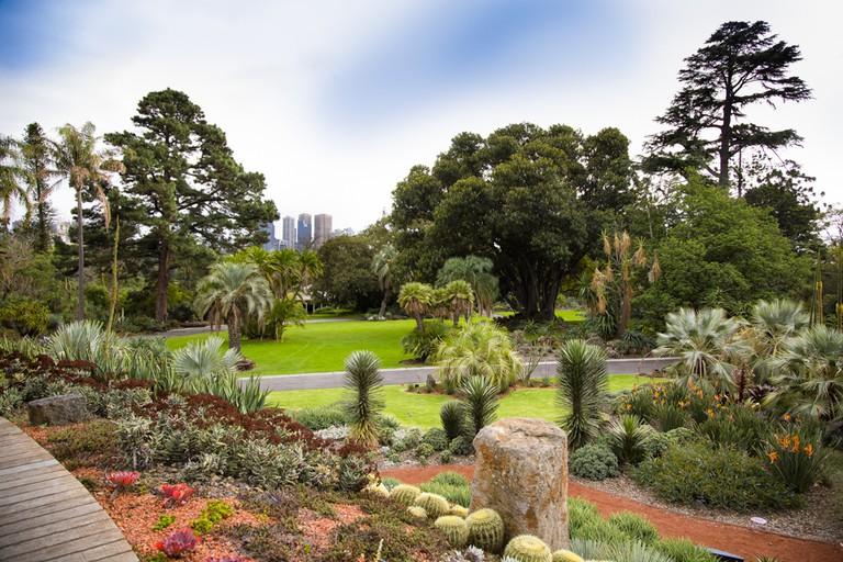 Courtesy of Royal Botanic Gardens Victoria, photographer Adrian Vittorio.
