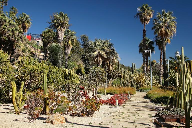 The Mossèn Costa i Llobera garden