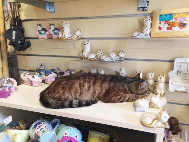 Cats 'o' Kotor