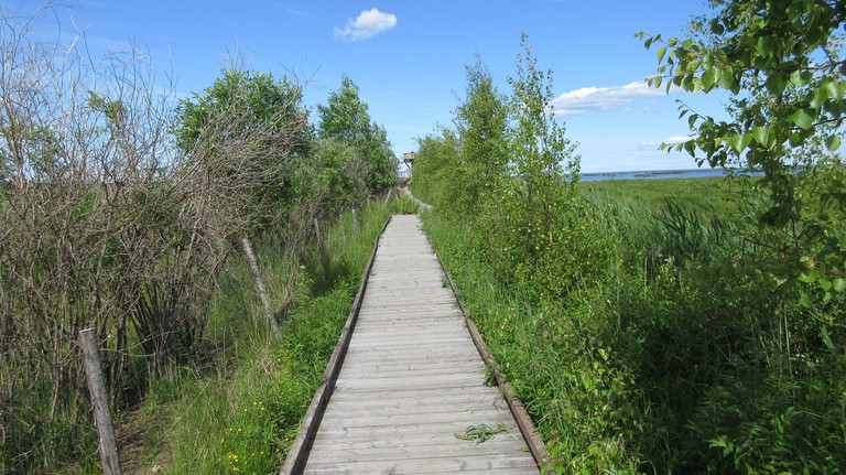 Path to Liminka Bay birdwatching tower / jartsf / Flickr