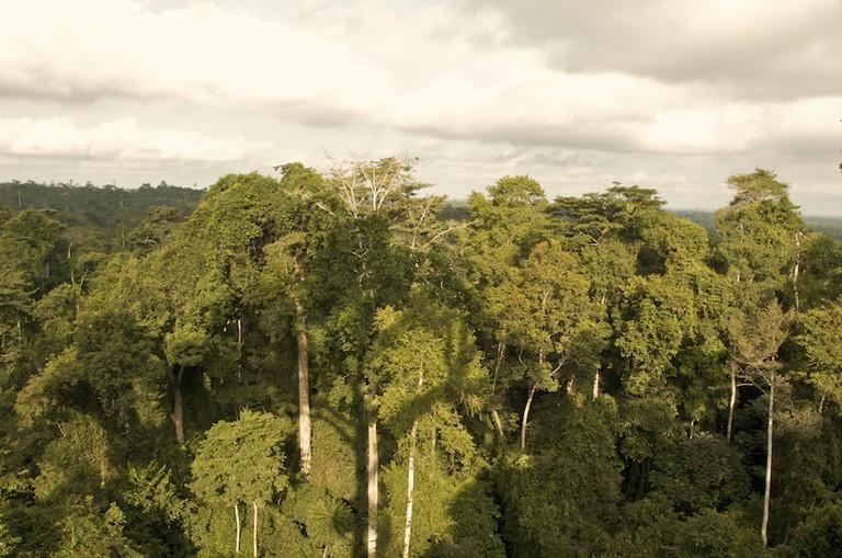 Canopy view, Kakum