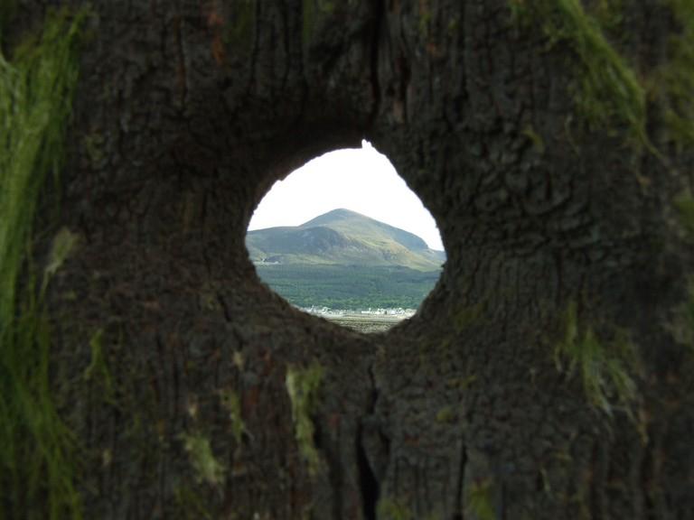 Slieve Donard seen through a tree