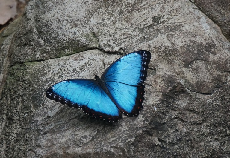 The most beautiful blue