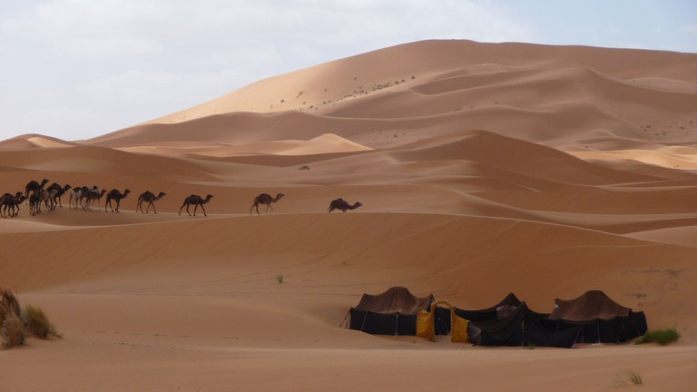 Camels and Berber camp