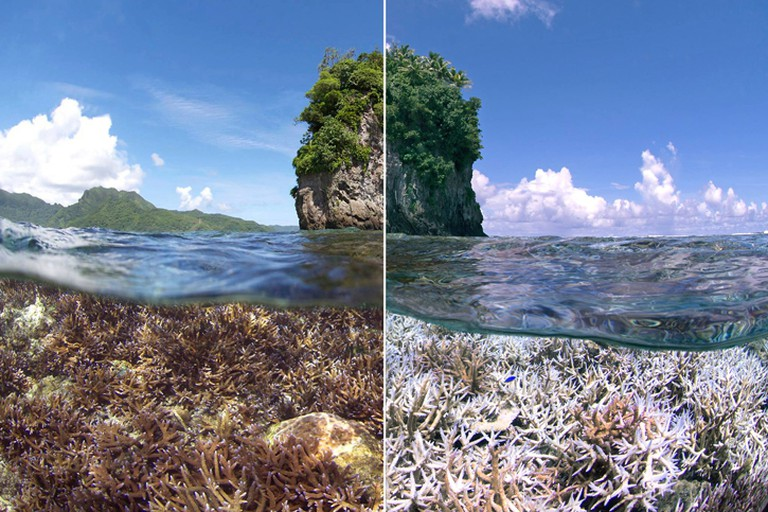 Coral at different levels of bleaching and degradation