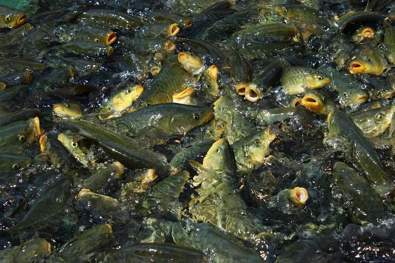 Balıklıgöl