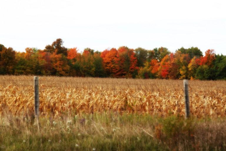 Autumn colors in Canada