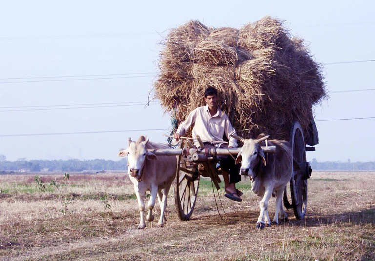 Farmer on Bullock Cart