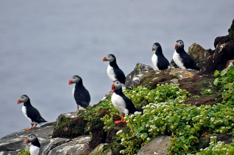 Grimsey Puffins | © Jennifer Boyer/Flickr