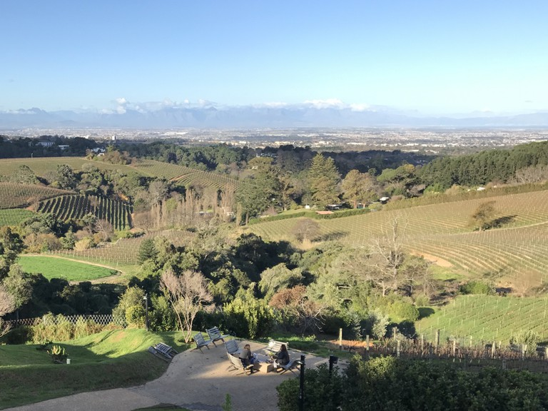 View over the Constantia Winelands
