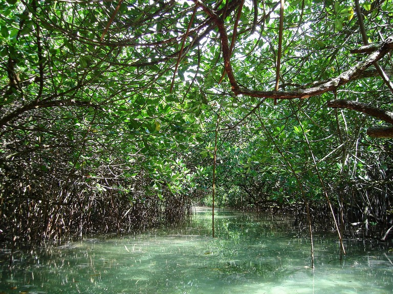 Paddle through a mangrove tunnel