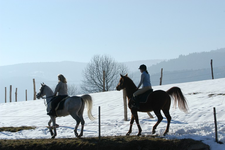 Vallée d'Orbey – chevaux