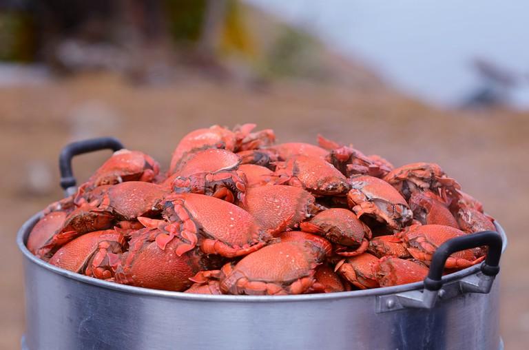Steamed Spanner Crabs