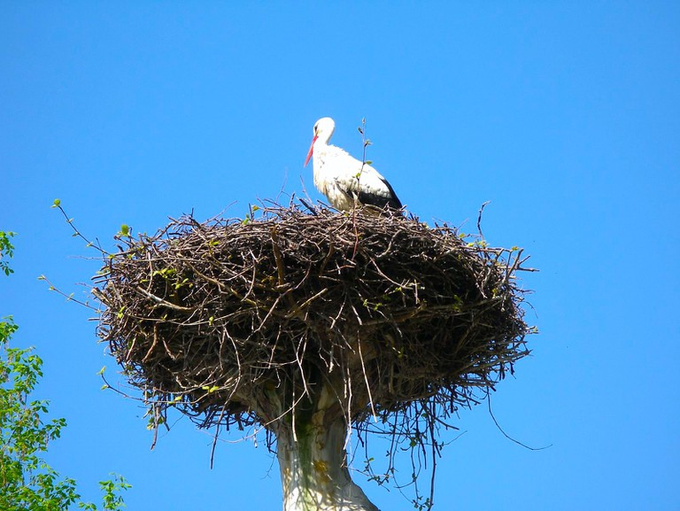 The stork is a symbol of Alsace