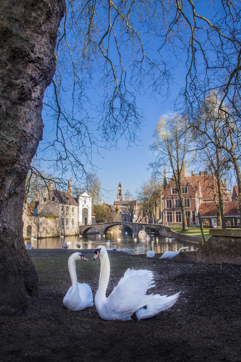 One lesser-known legend says a couple of kind swans kept an imprisoned girl company by the bars of her Bruges cellar | © Jan D'Hondt / courtesy of Visit Bruges