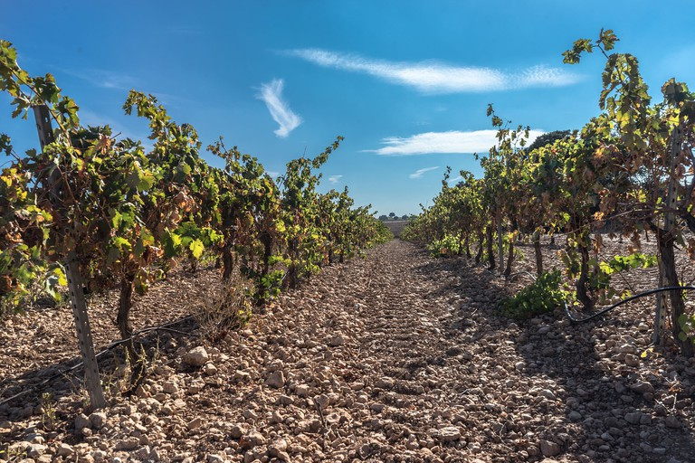 Discover Spanish vineyards CC0 Pixabay