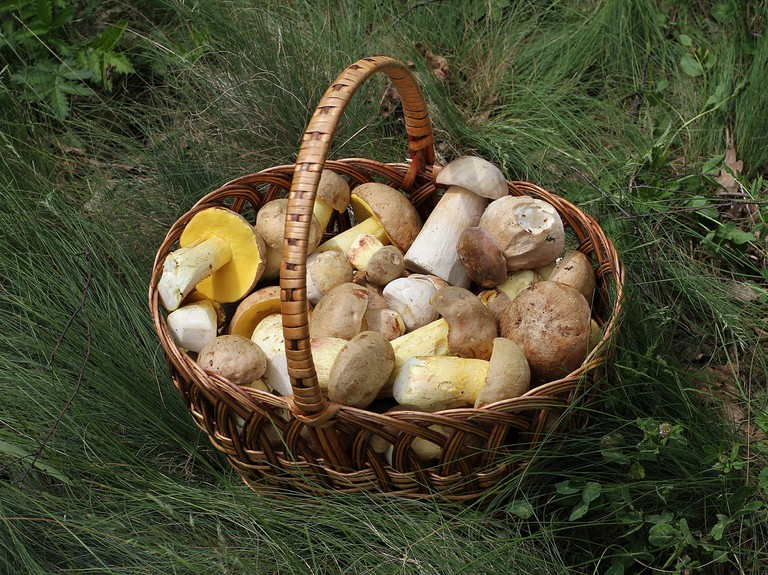 wild mushroom foraging | © George Chernilevsky / Wikimedia Commons