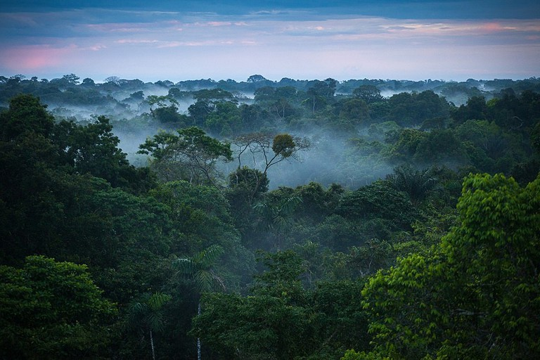The Amazon rainforest | © Brazilian things