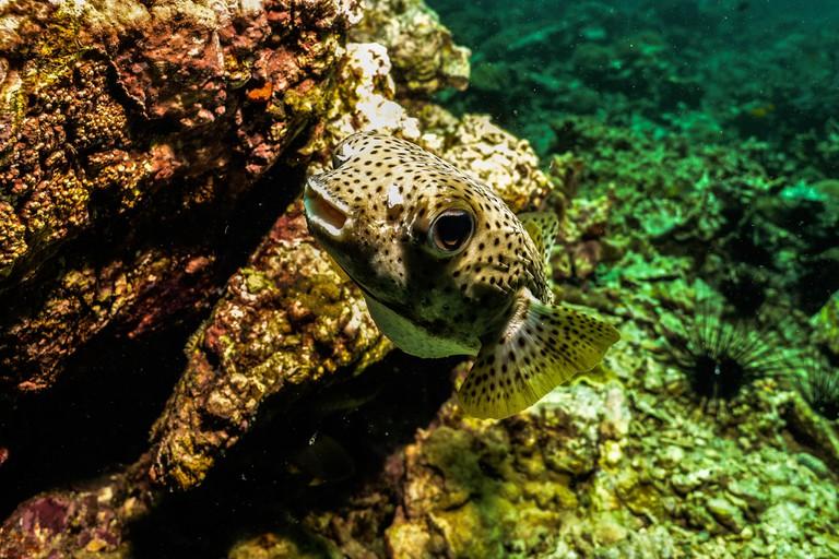 Fish swimming past rocks