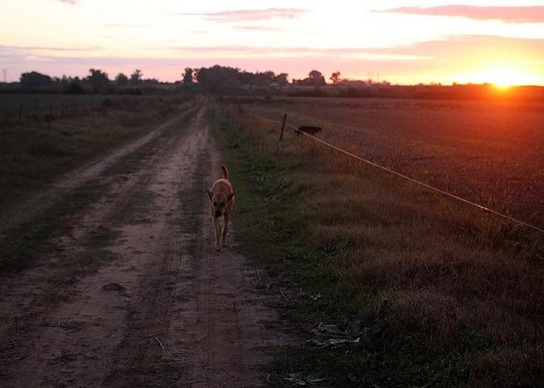 Countryside Sunset and dog, Uruguay