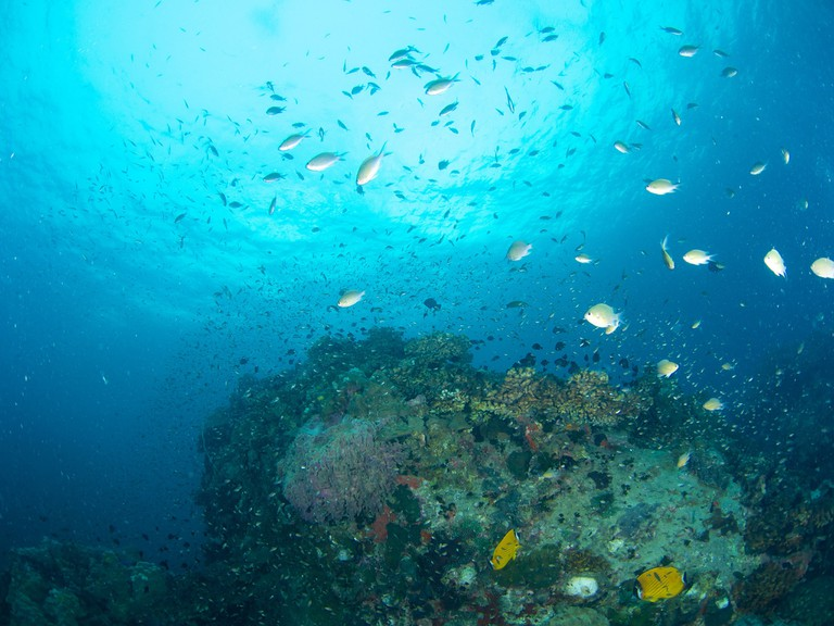 Koh Tao reef