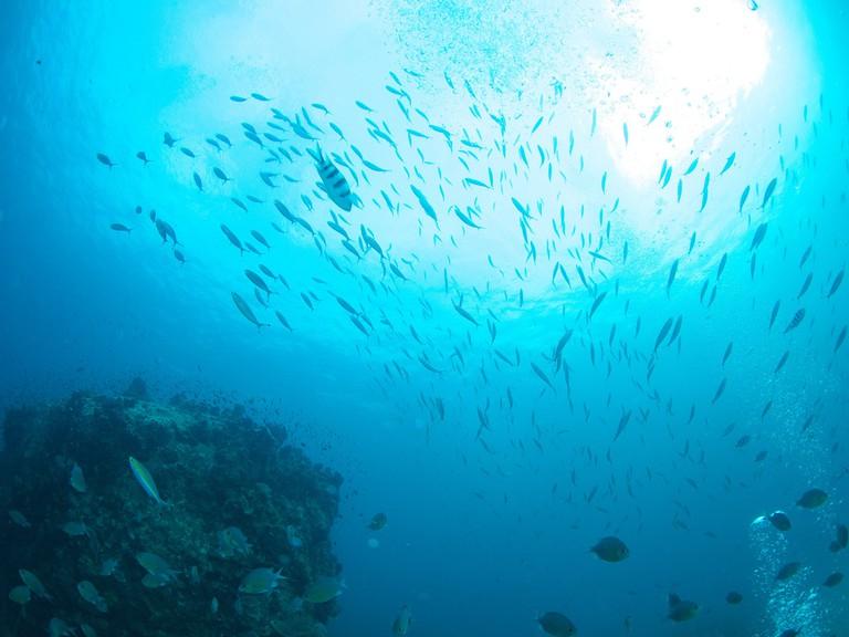 Fish at Twin Rocks, Koh Tao