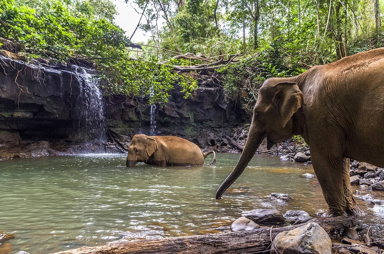 Majestic Asian Elephants