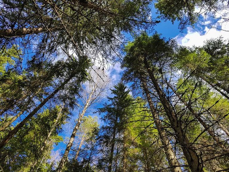 Finnish trees | © Visit Lakeland / Flickr