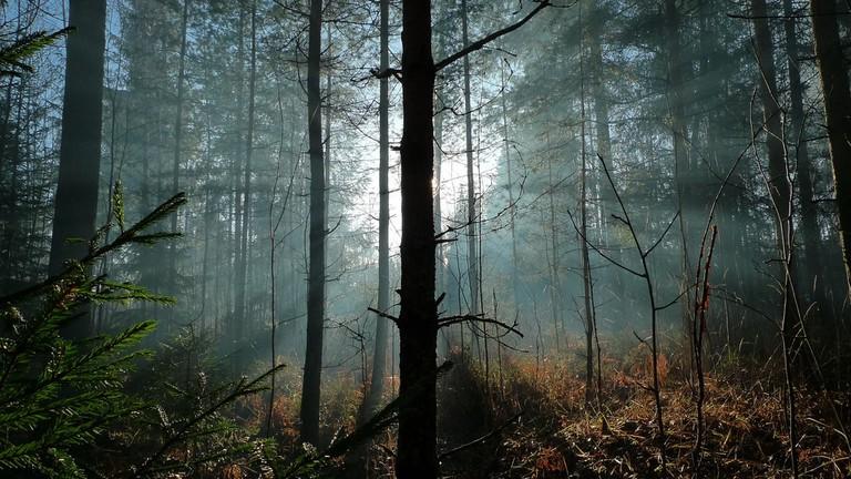 A forest in Finland   © neekoh.fi / Flickr