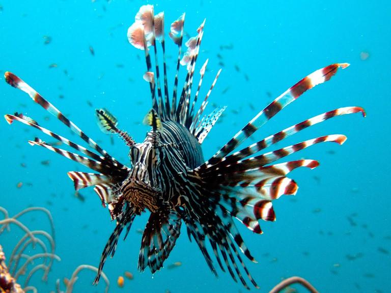 Stunning fish