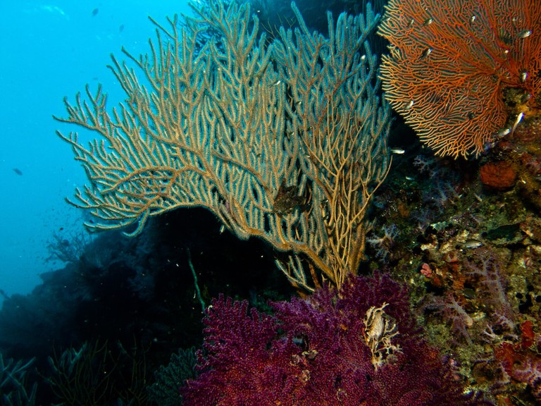 Colourful sea plants and coral