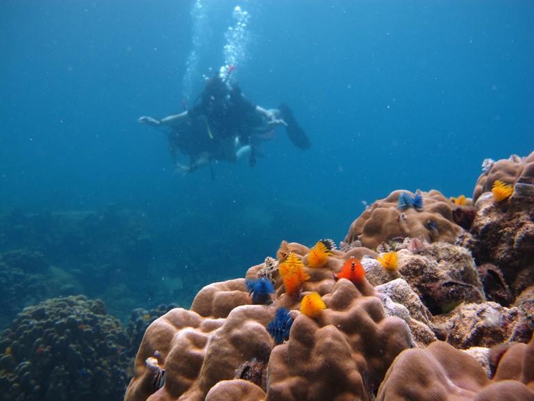 Coral species at Koh Tao