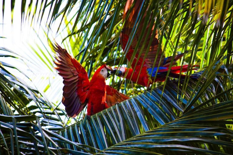 Go wild in Panama I © Debora Tingley / Unsplash