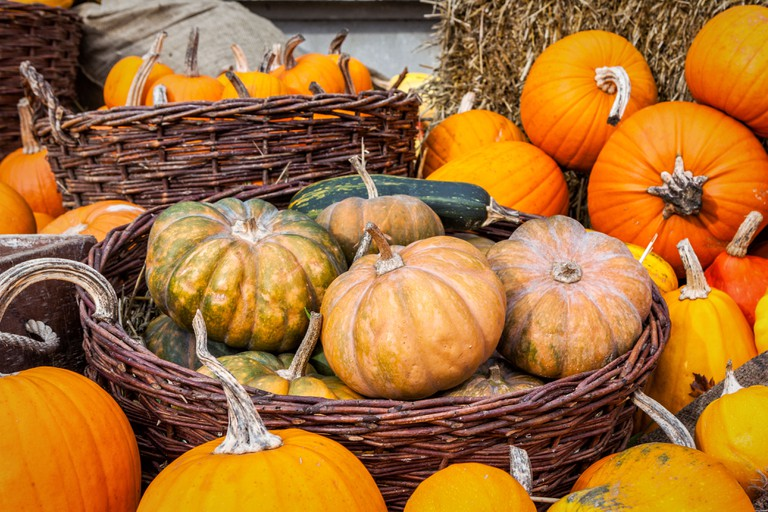 Squashes and pumpkins displayed at the 'Incredibles' food exhibition.