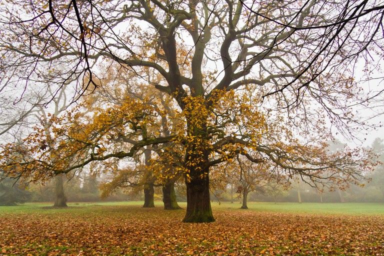 Autumn tree in park in London.
