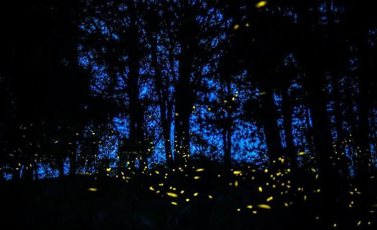 Firefly Sanctuary / flickr