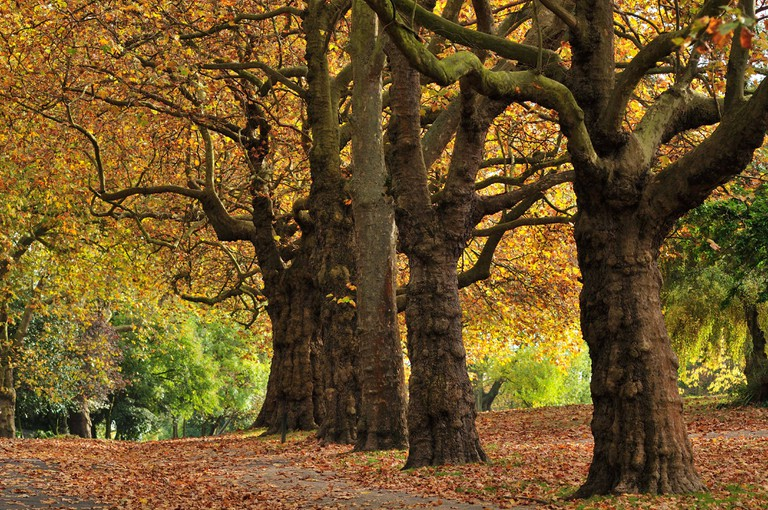 Trees in Finsbury Park, North London.