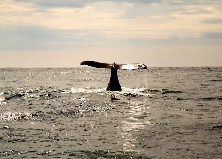 A humpback whale sighting