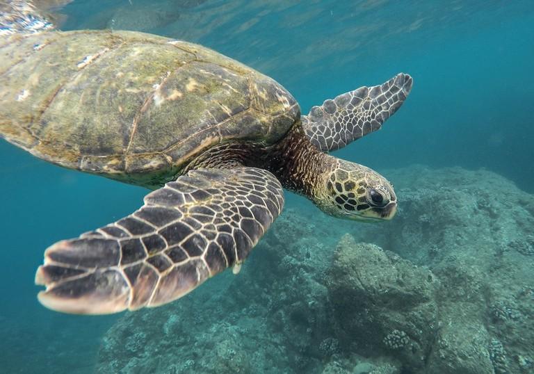 Underwater magic I