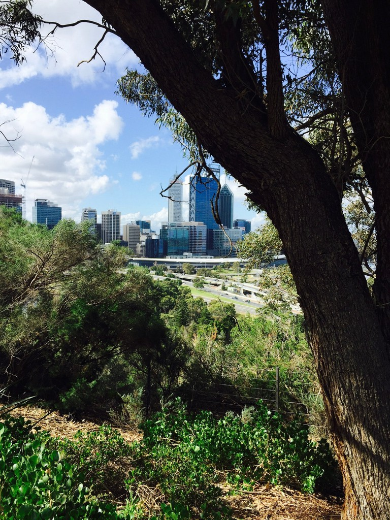 Kings Park is one of the largest inner-city parks in the world, photo taken by Carmen Jenner